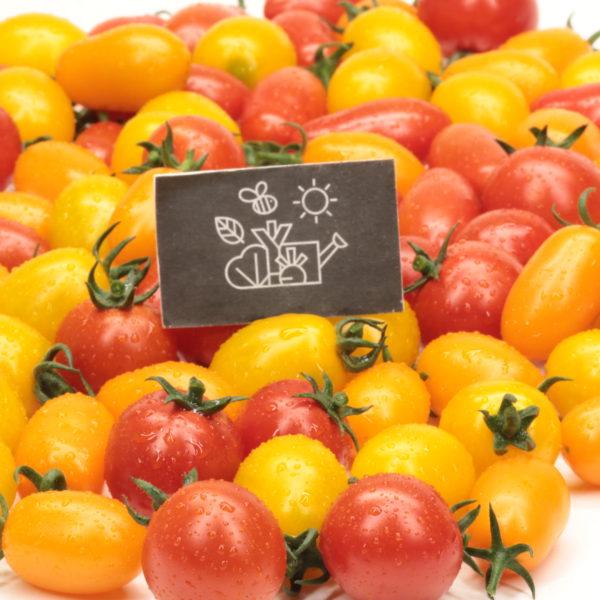 Tomates cerises en mélange