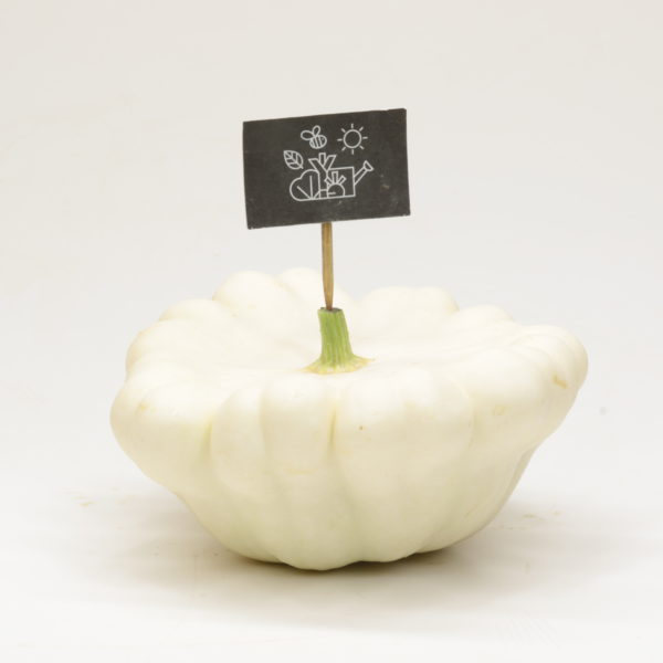 Pâtisson blanc frais