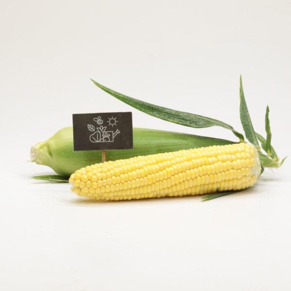 Maïs doux