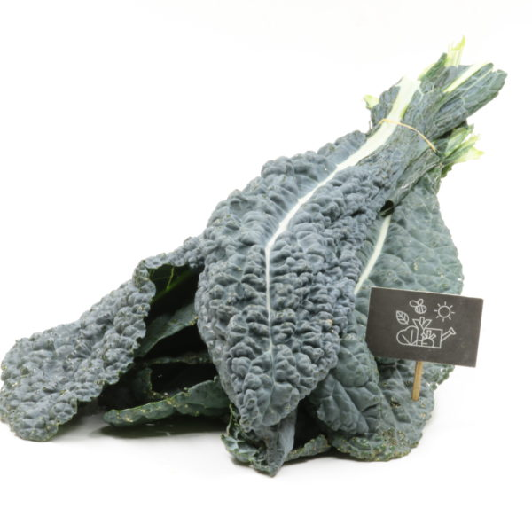Kale noir de toscane