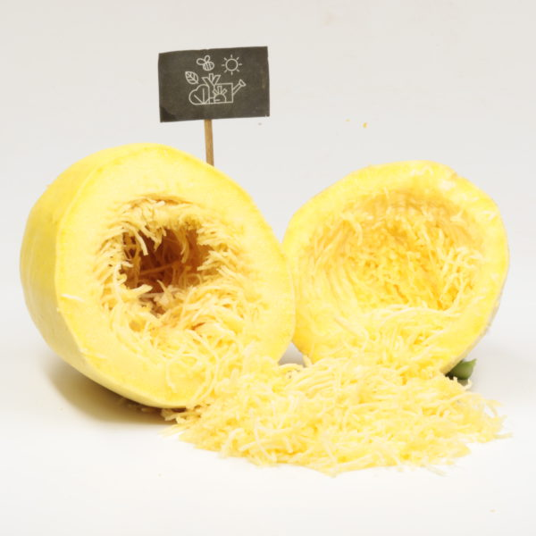 Courge spaghetti jaune