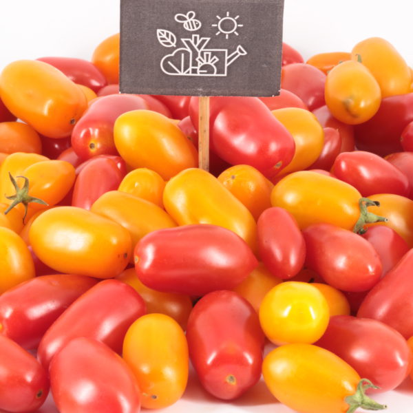 Tomates dattes en mélange