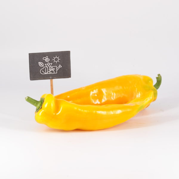 Poivron long jaune