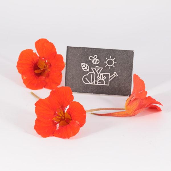 Fleurs de capucine