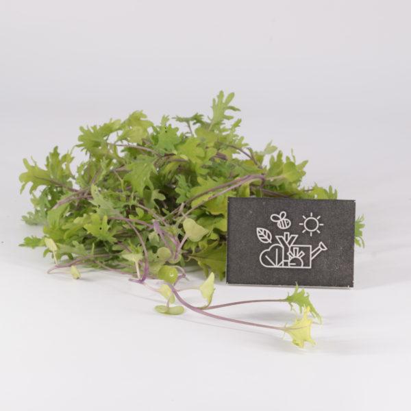 Mini pousses de kale
