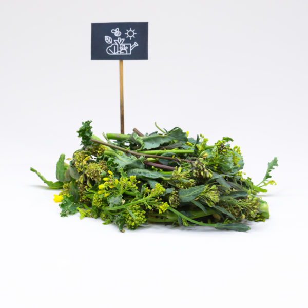 Brocoli de kale