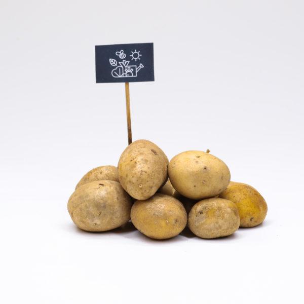 Pommes de terre chair ferme Nicola